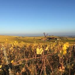 Route de Vin, Alsace