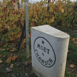 Moët & Chandon planting, Hautvillers